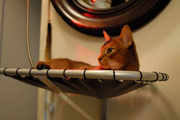 This cat in a space hammock | The Top 20 Animals Hanging Out In Hammocks