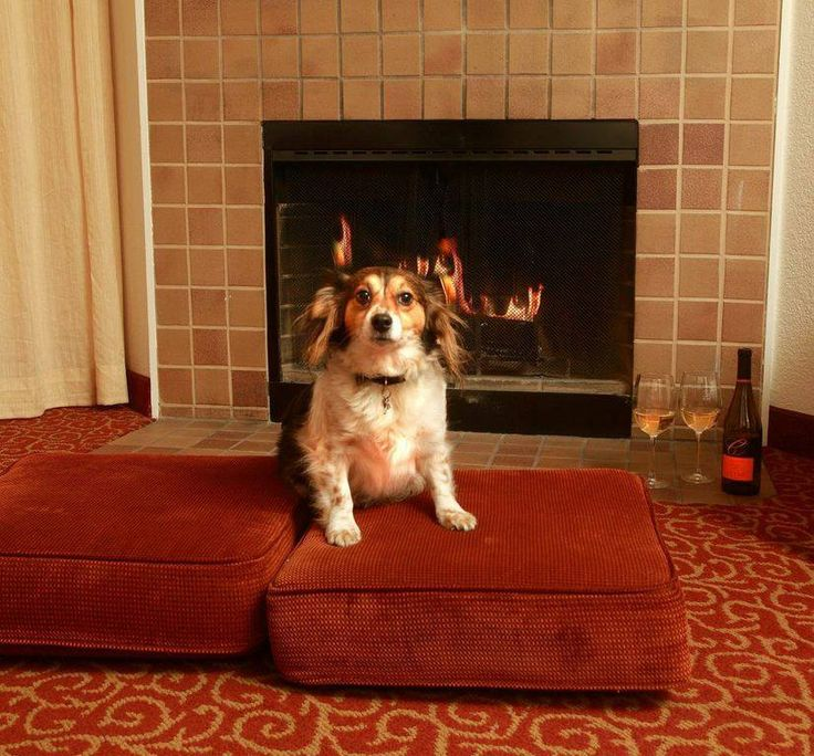 We Love Being A Pet Friendly Hotel And Meeting All Of Our Furry Guests