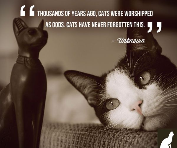 """Funny Cat Sayings Quotes: """"Thousands Of Years Ago, Cats Were Worshipped As Gods"""