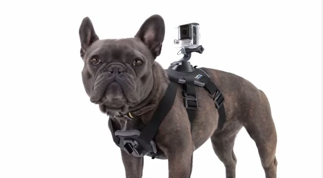 #Cutie Go Pro pour chiens!