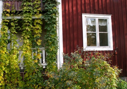Vid Stormyrbergets Lantgård i Piteå bor du i bed & breakfast eller självhushåll. På gården finns får, hästar, höns, påfåglar, bin, hund och katt.