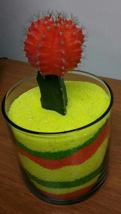 Cactus o suculenta