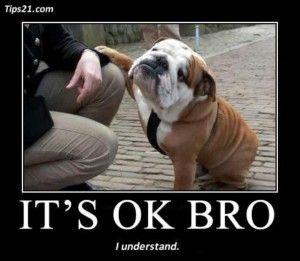 Grappige Honden Foto's - Loving Your Dog