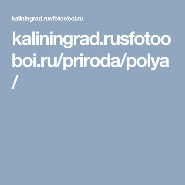 kaliningrad.rusfotooboi.ru/priroda/polya/