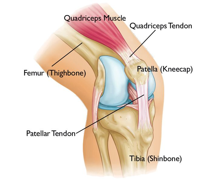 25 best ideas about tendon tear on pinterest acl rehab for Exterior knee pain