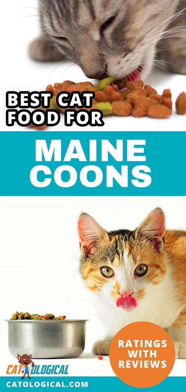 Pin On Cat Food Treats