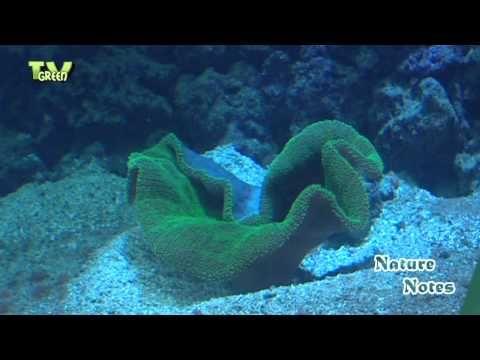 Nature Notes - lagune ocean aquarium #02 - YouTube