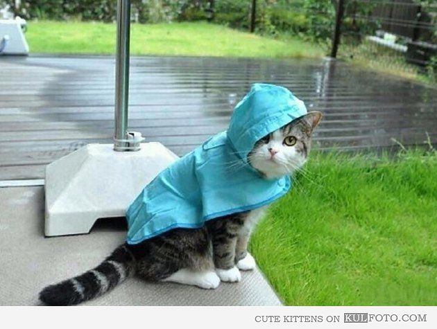 Ready for Hurricane Sandy - Cute and funny kitten wearing ...