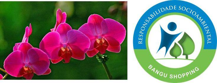 """Com a proximidade da primavera, a estação das flores, o Bangu Shopping vai receber, nos dias 16, 17 e 18 de agosto, a mostra gratuita 'Caminho das Orquídeas', organizada pelo Orquidário Binot e por integrantes do projeto 'Plantar Bangu'. A exposição levará ao público cerca de cinco mil espécies dessa planta tão admirada pelos amantes...<br /><a class=""""more-link"""" href=""""https://catracalivre.com.br/geral/rede/barato/bangu-shopping-recebe-a-mostra-caminho-das-orquideas/"""">Continue lendo »</a>"""