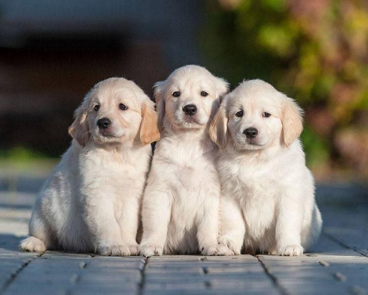 Golden Retriever names for cute puppies like these... http://www.dog-names-and-more.com/Golden-Retriever-Names.html