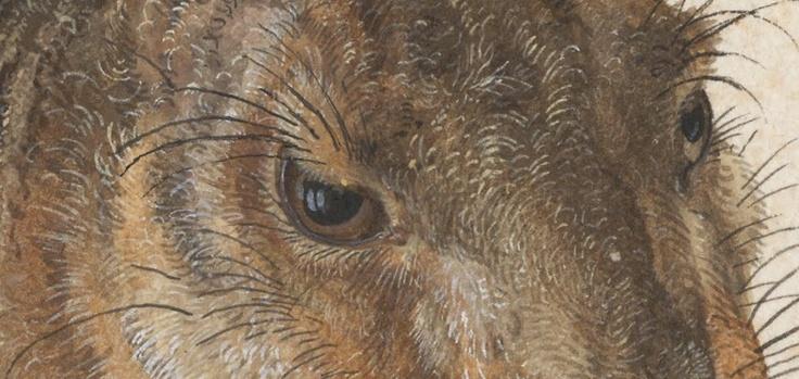 Albrecht Dürer's Young Hare on Google Art Project - Boing Boing