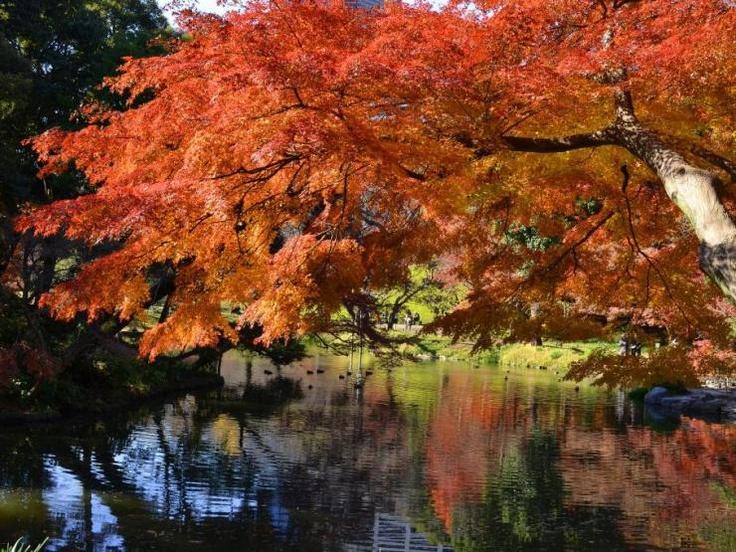 A lovely corner of Koishikawa Korakuen Gardens in Tokyo