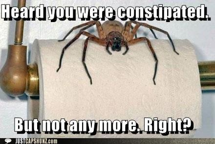 Giant scary spiders memes - photo#7