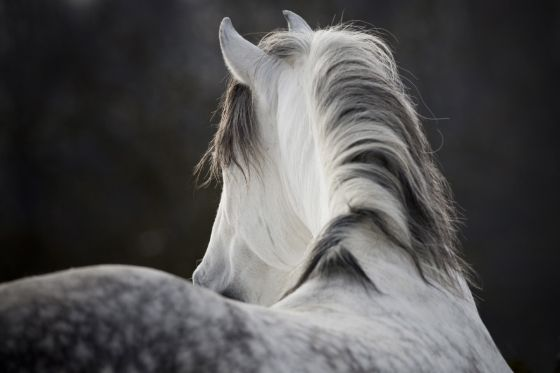 45 best Drawing Horses images on Pinterest | Horse drawings, Horses and Drawings of horses