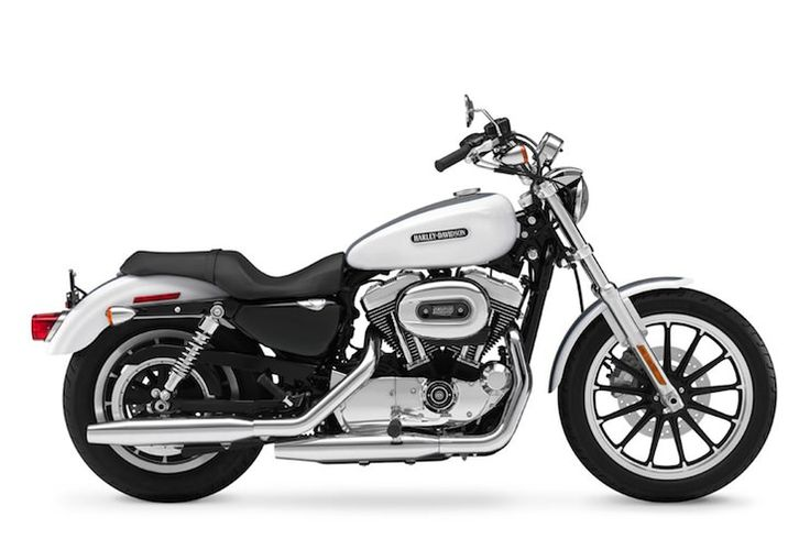 Harley Davidson Sportster 1200 Low XL1200L Buying Guide   Harley Davidson Sportster