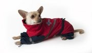 Raincoat for dogs. In national colors - norwegians. #dog