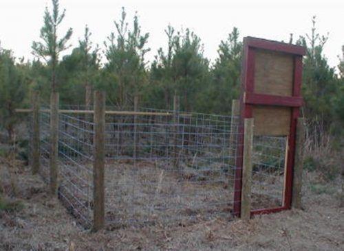 DIY Project: Building a Hog Trap Homesteading  - The Homestead Survival .Com