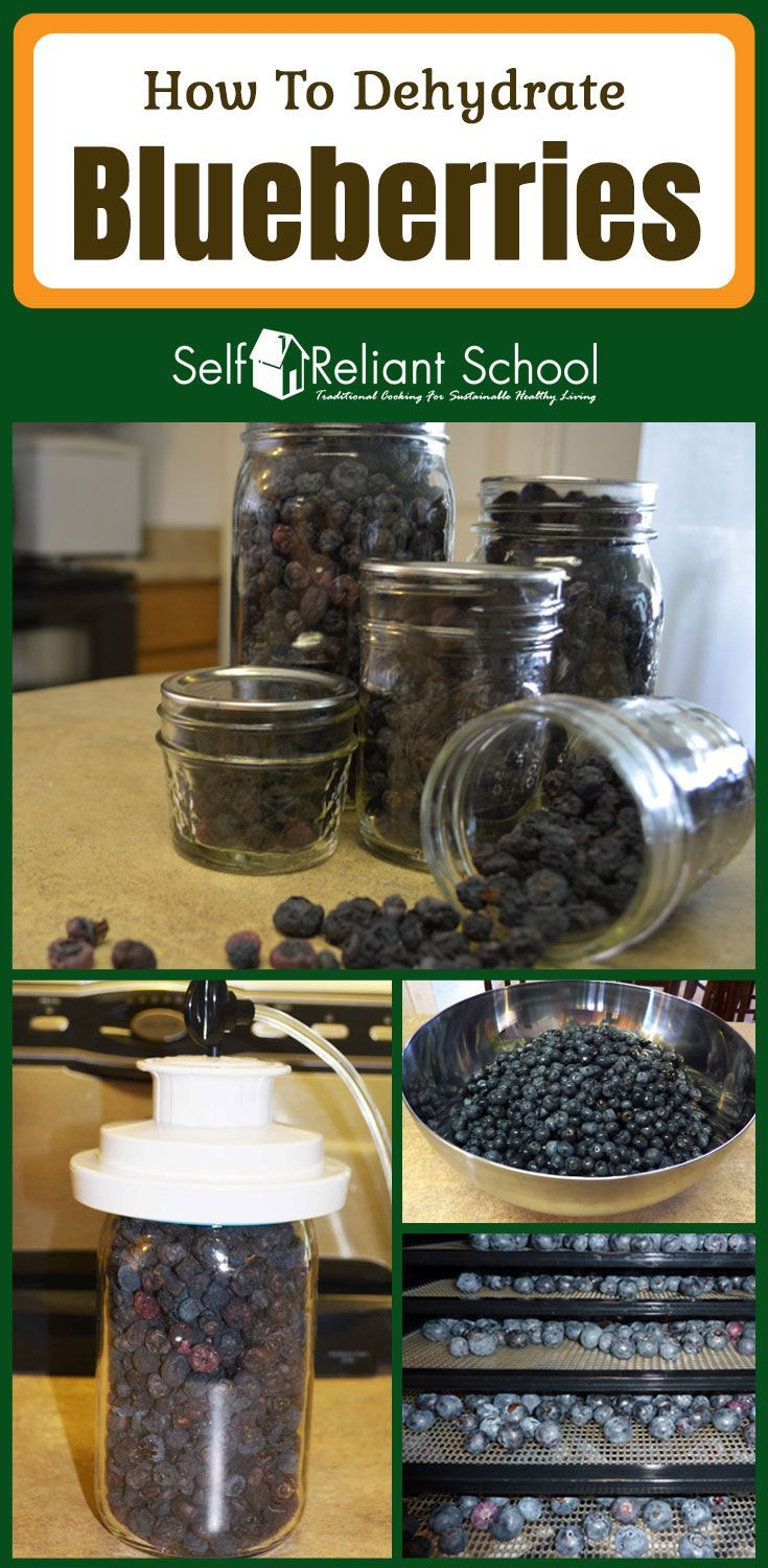 Step by step directions for dehydrating blueberries. #beselfreliant via @sreliantschool