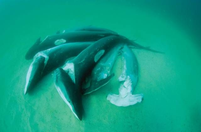 how to see where sharks are in ballina live