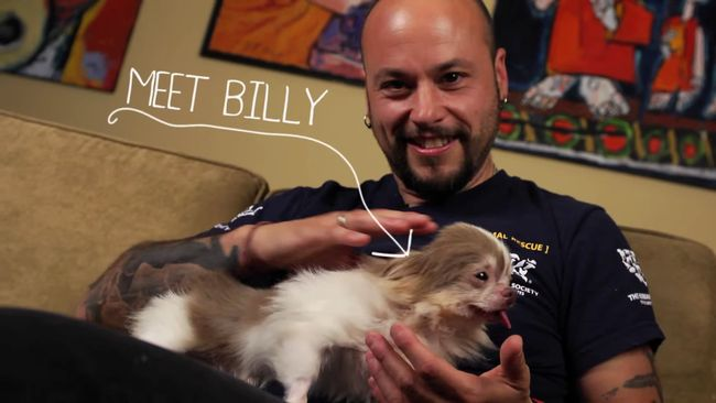 Pet Rescue News: Billy The Puppy Just Met His Guardian Angel, AnD The Result Is Amazing. #PetRescueBuzz