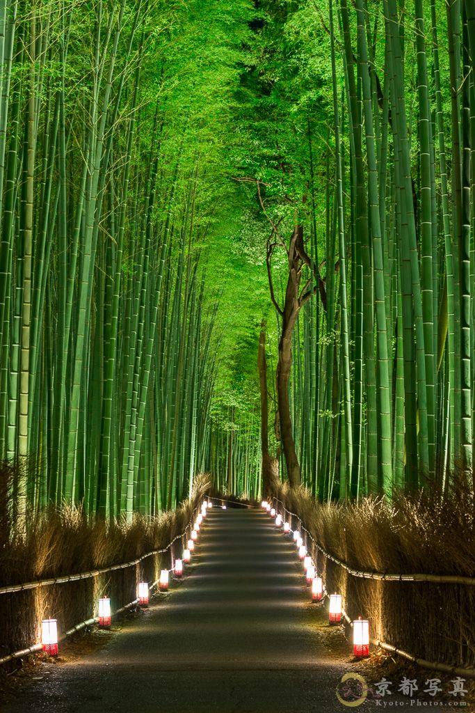 暖かな灯りが嵐山を染めて 【竹林の道・嵐山花灯路】