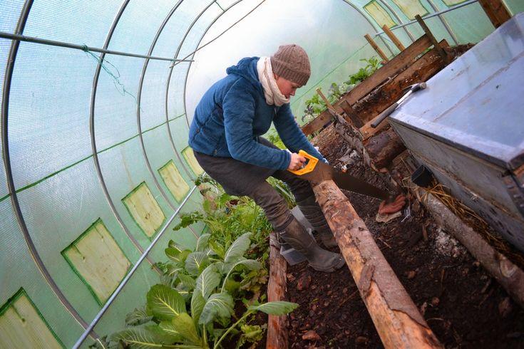 Building hot beds in polytunnel. Sweden, December 2014. #garden #gardening #kitchengarden #growyourown #vegetables #trädgård #odla #köksträdgård #hotbed #polytunnel