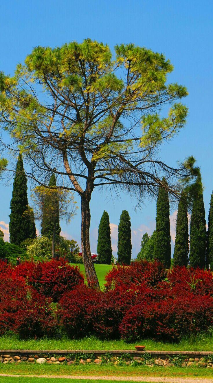 Valeggio sul Mincio Parco giardino di Sigurtà