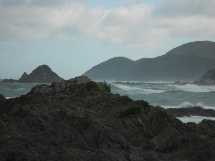 Princess Bay, looking over Tapu Te Ranga Island, Wellington. www.traceyalvarez.com