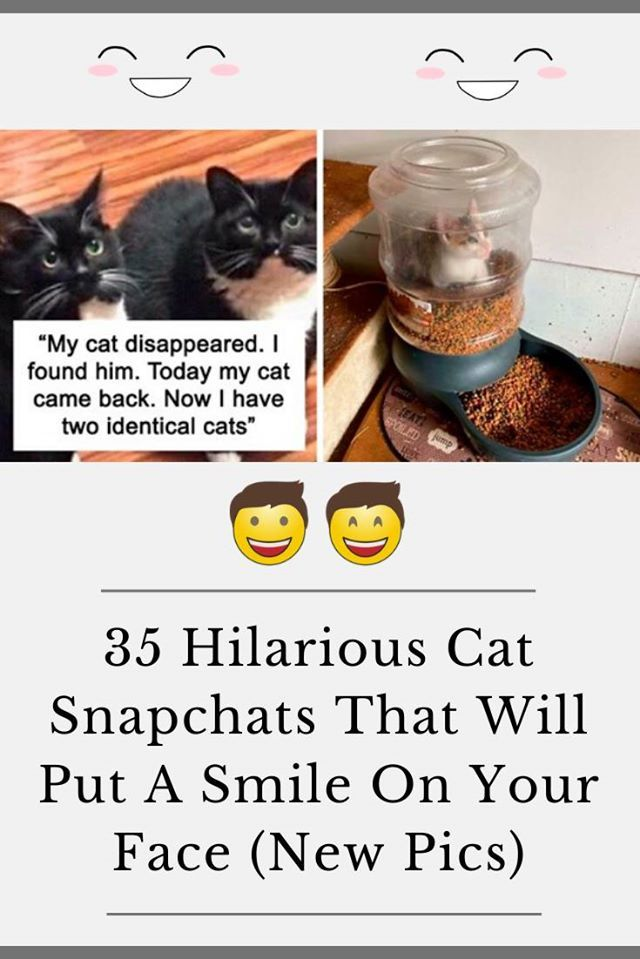 35 Hilarious Cat Snapchats That Will Put A Smile On Your Face New