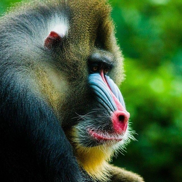 Na prisão perpétua. #zoo #zoologico #animal #tristeza #condenado #nature #natureza natureza,#nature,#zoologico,#pained,#unhappy