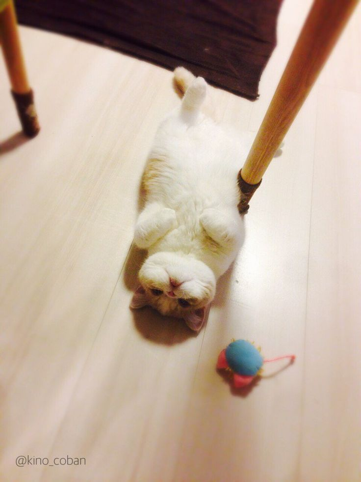 初めての床暖房にとろける猫
