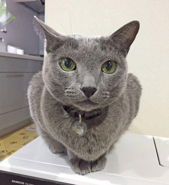 ネコの死因トップを占める腎不全に立ち向かう製剤や機器の開発が進んでいる ネコの寿命30歳 を現実のものとすべく奮闘する最新の医療現場を追った 2016年末発売の Nyaera 第1弾の取材で 猫の健康 腎不全 猫