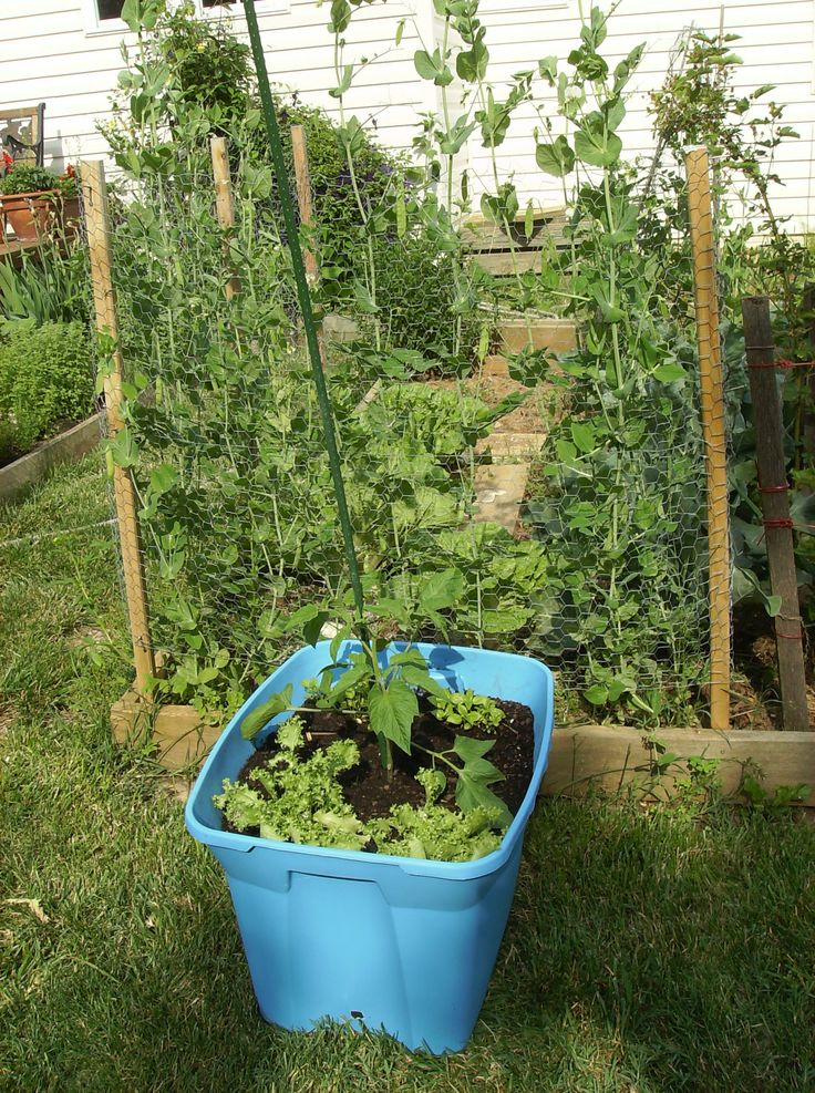 534 best Container Vegetable Gardening images on Pinterest - container garden design ideas