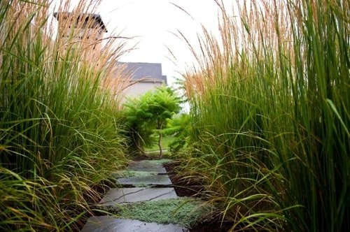 71 best images about house front yard planning on for Ornamental grasses for front yard