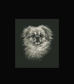 TIBETAN SPANIEL  - This is the actual size of the scratch art. This size is intended as example of a memorial for an urn. Smaller work can easily be done for a pendant or jewellery.  A web site dedicated to this is planned. In the mean time I can be contacted at sue@suewalters.com #tibetanspaniel