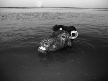 Buffalo by patricio martinez via PhotographicMuseum.com