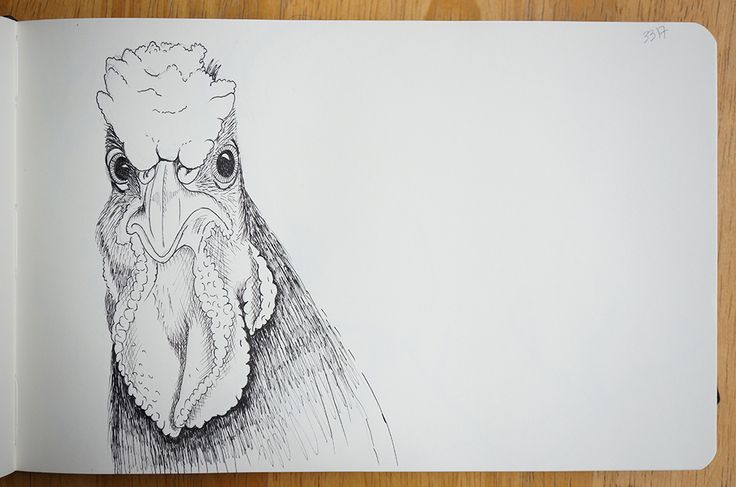Rooster - Portraits in landscape