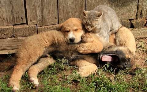 Kutya,macska,állatkölyök háttérkép 220709