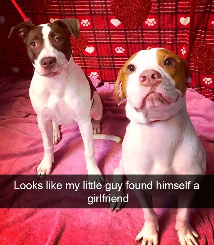 Funny Snapchats Dog Photo — 50 Pics