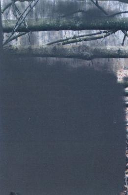 Forest (57/80) » Art » Gerhard Richter: