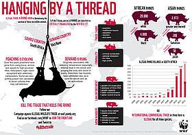Infographic on rhino facts / ©: WWF