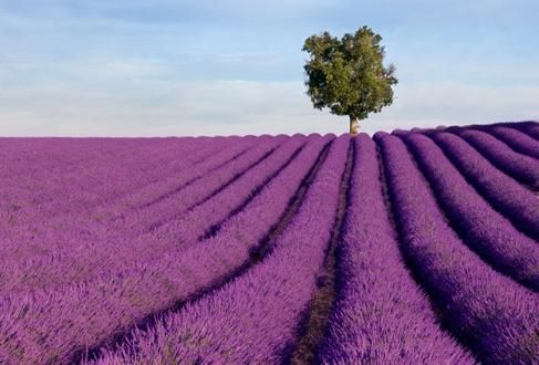Lavander from Provence; this must smell amazing!