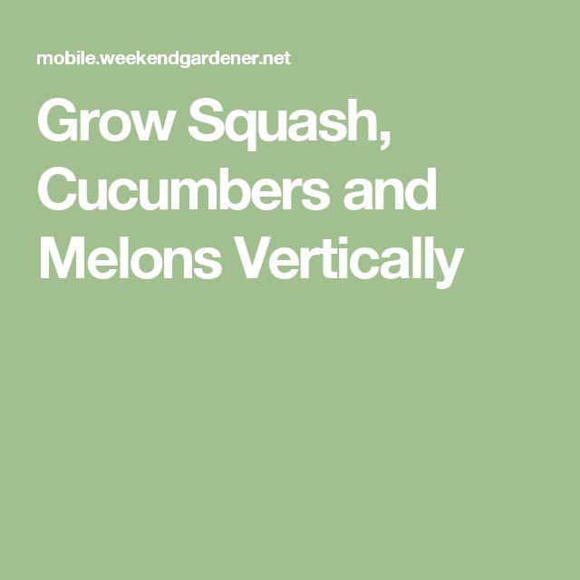 Grow Squash, Cucumbers and Melons Vertically