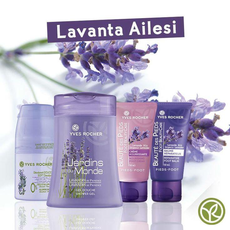 #yvesrochertr #lavender
