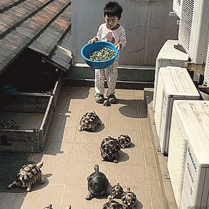 """tastefullyoffensive: """"The tortocalypse has arrived. [full video] """" D-Day"""
