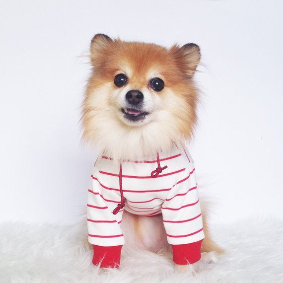 Red Stripe Hoodie Xs 4xl Pull Over Dog Hoodie Cute Dog Clothes