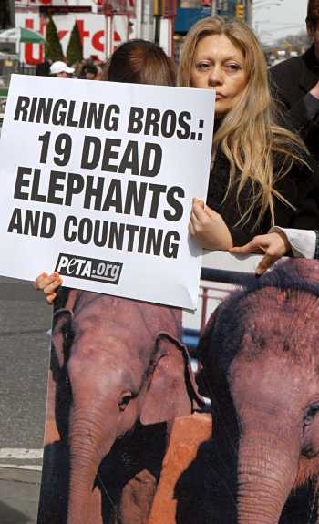 PLEASE BOYCOTT ALL CIRCUSES THAT HAVE ANIMALS ANY ANIMALS. Cirque de soleil uses only humans - go see that show instead!  Giving Ringling Bros your money supports animal cruelty.  Surely you don't want to teach your children that that beating animals into submission is entertainment.