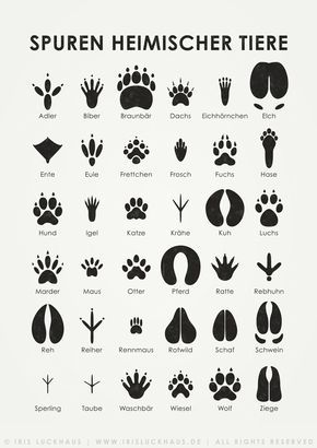 """Sheets for the identification of different leaves, animal tracks and flying birds. Available as poster oder print at Posterlounge and as postcards at Artflakes. Also part of the """"Lily Lux Notizbuch"""" (..."""
