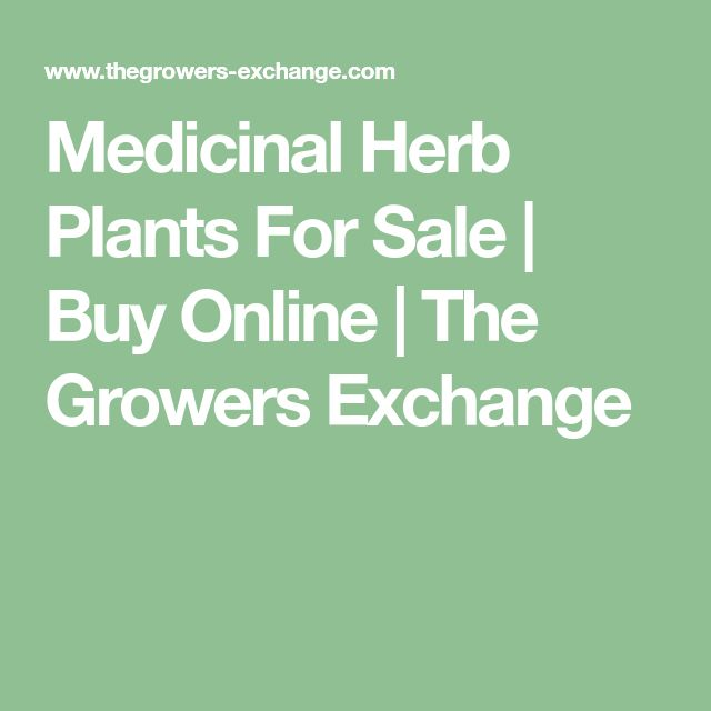 Medicinal Herb Plants For Sale | Buy Online | The Growers Exchange