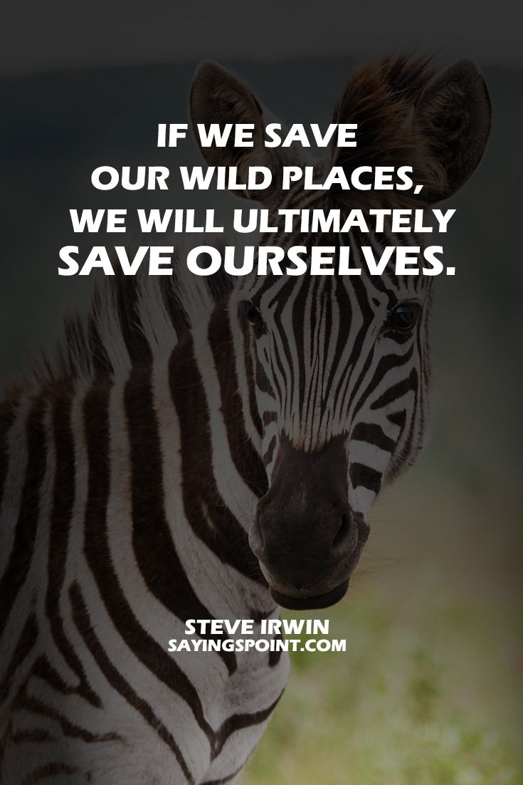 40 Save Wildlife Quotes And Sayings Wildlife Quotes Save